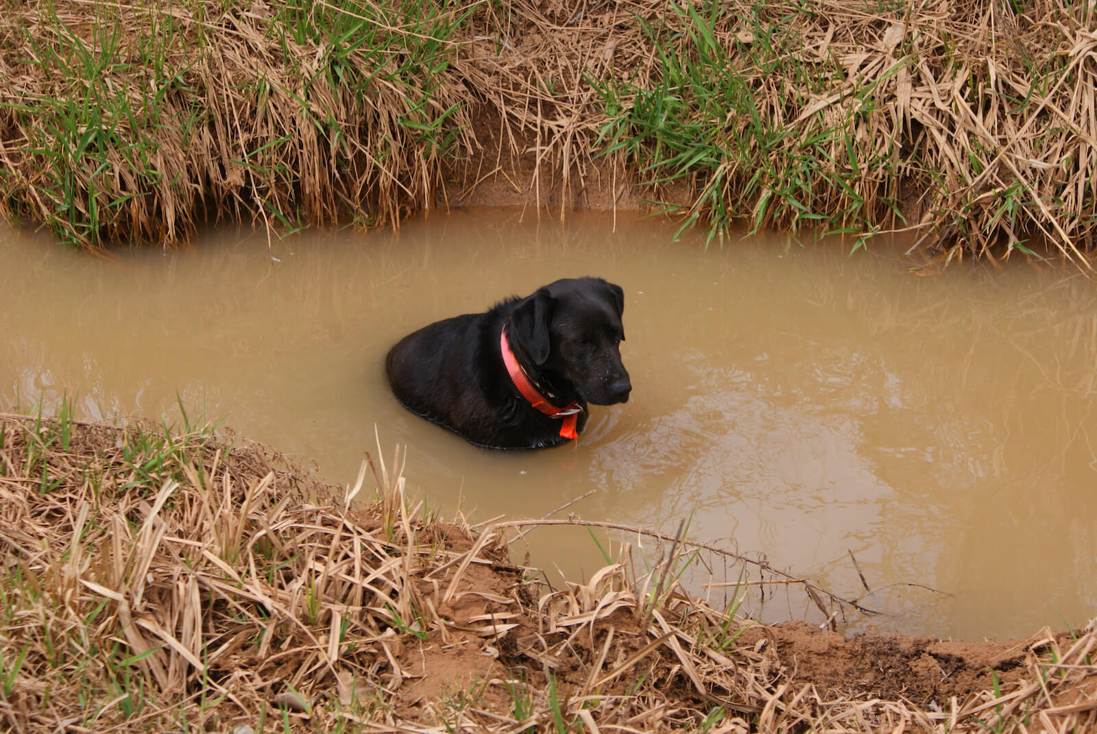 Ranch Dog Rucca in Creek