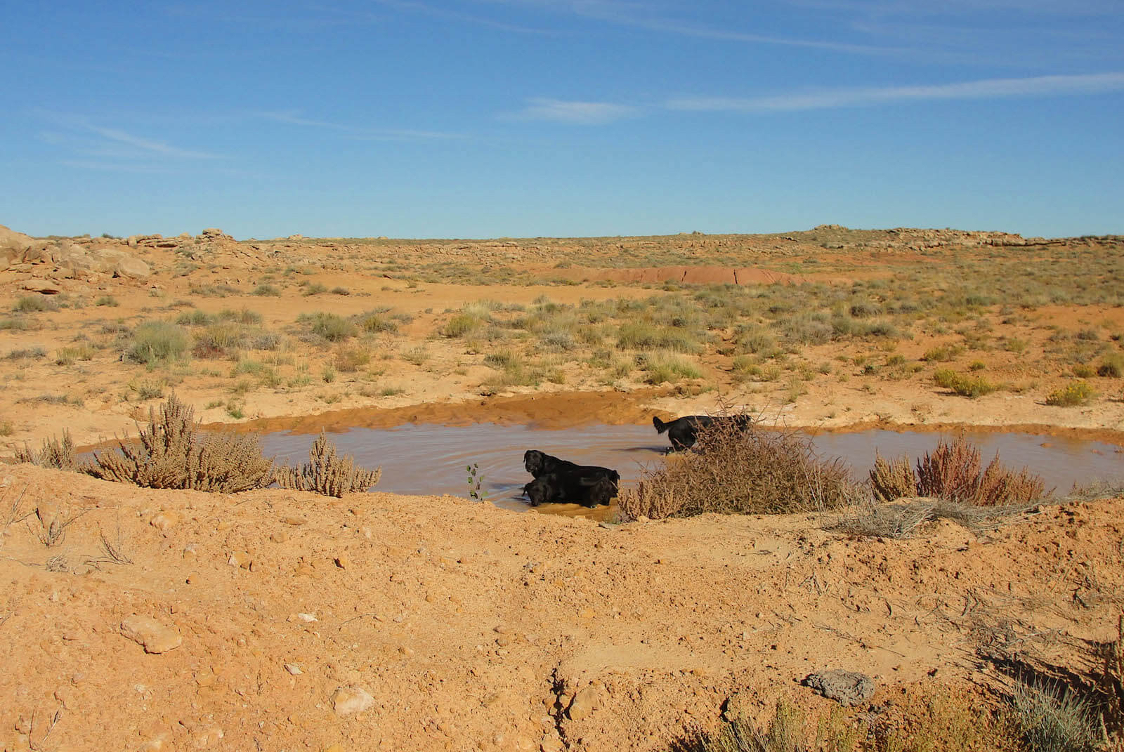 Water Hole with Ranch Dogs Will and Rucca