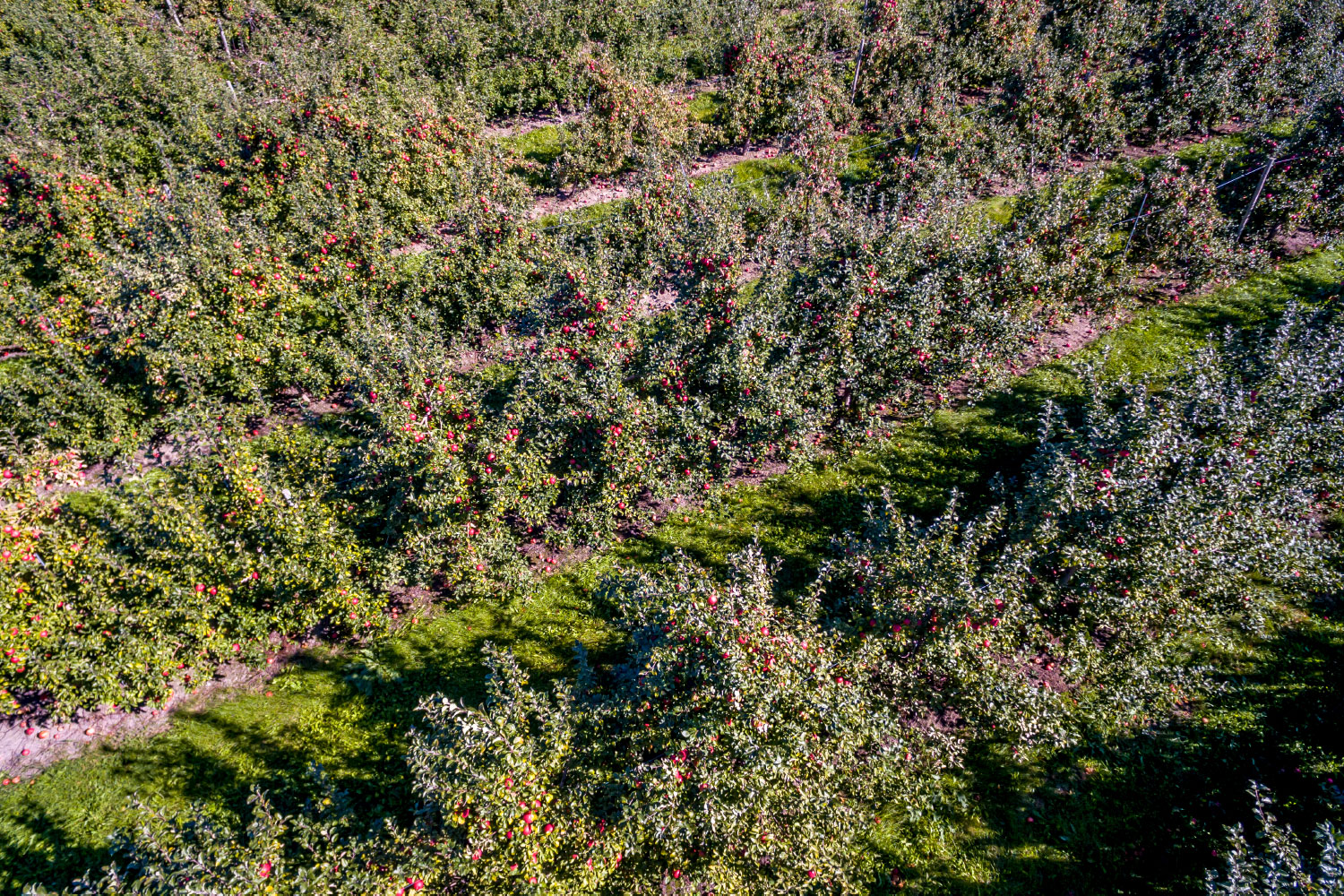 sky view of orchards