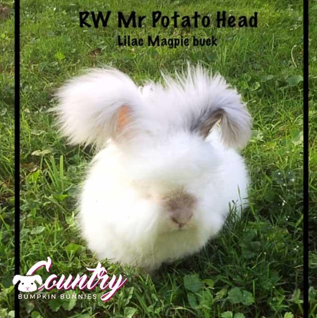 RW Mr. Idaho Potato Head
