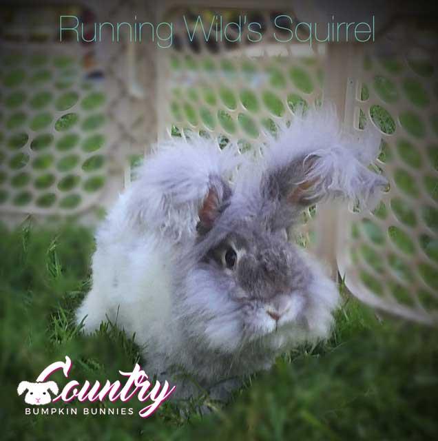 RW's Squirrel