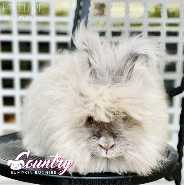 Snazzy Buns Penelope