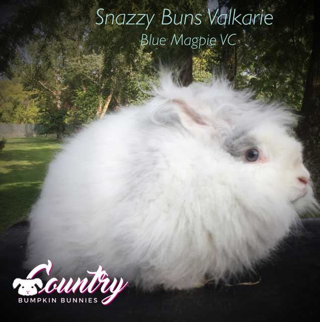 Snazzy Buns Valkarie