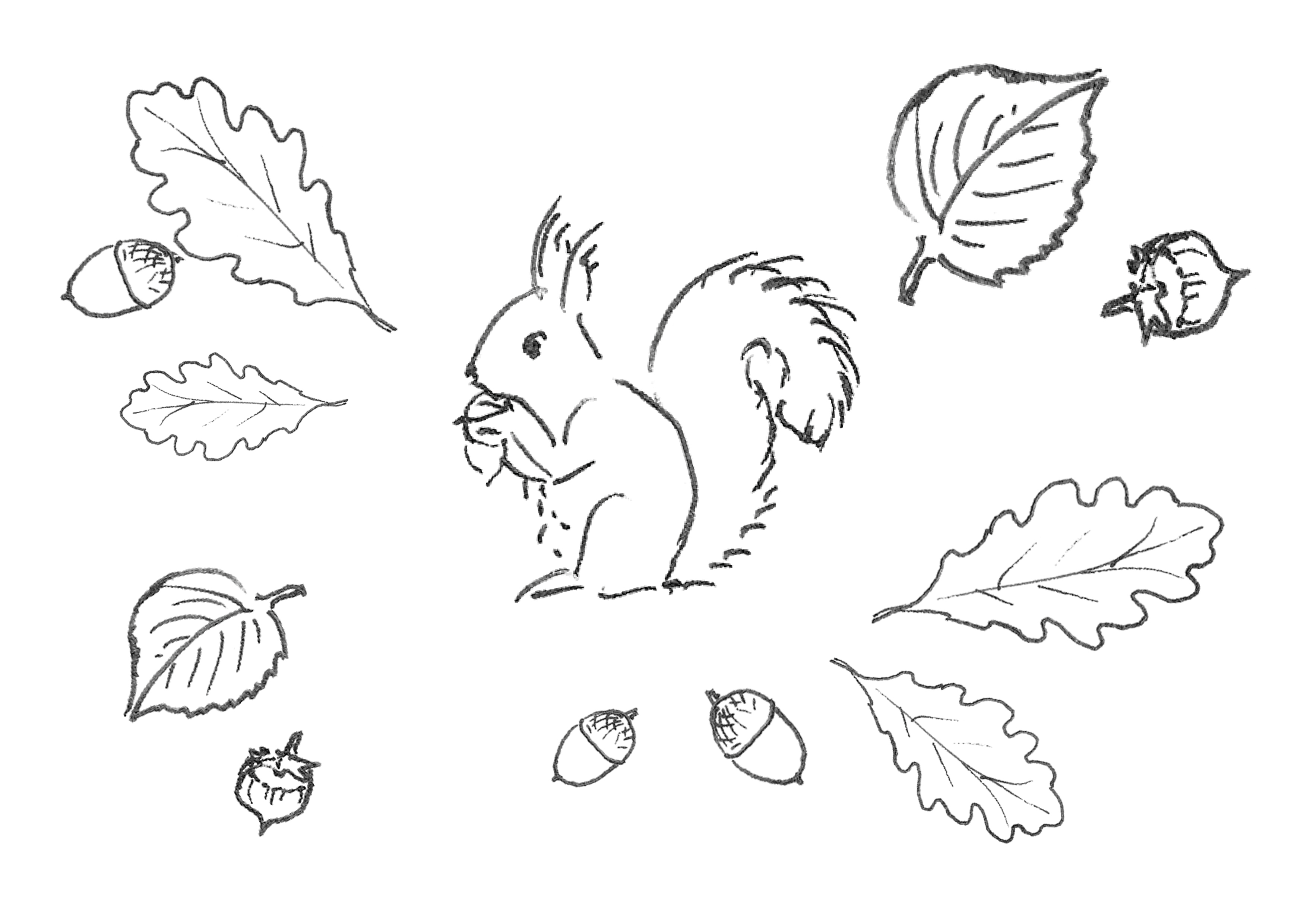 Piirroskuva oravasta, jonka ympärillä on tammenterhoja ja -lehtiä.