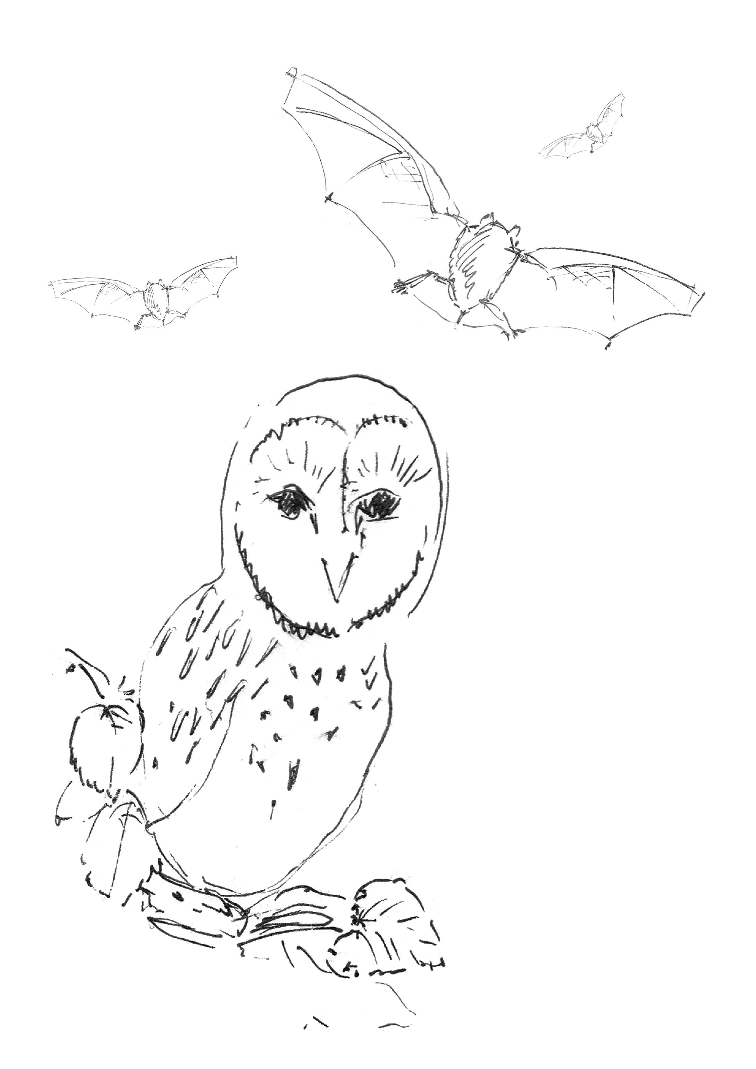 Piirroskuva pöllöstä ja lepakosta.