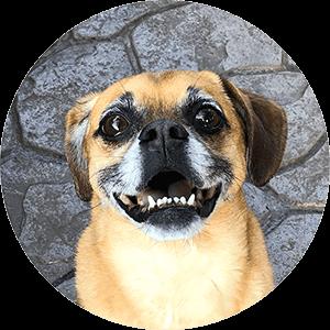 Headshot of Putty the Carputty dog mascot smiling up at the camera | Carputty