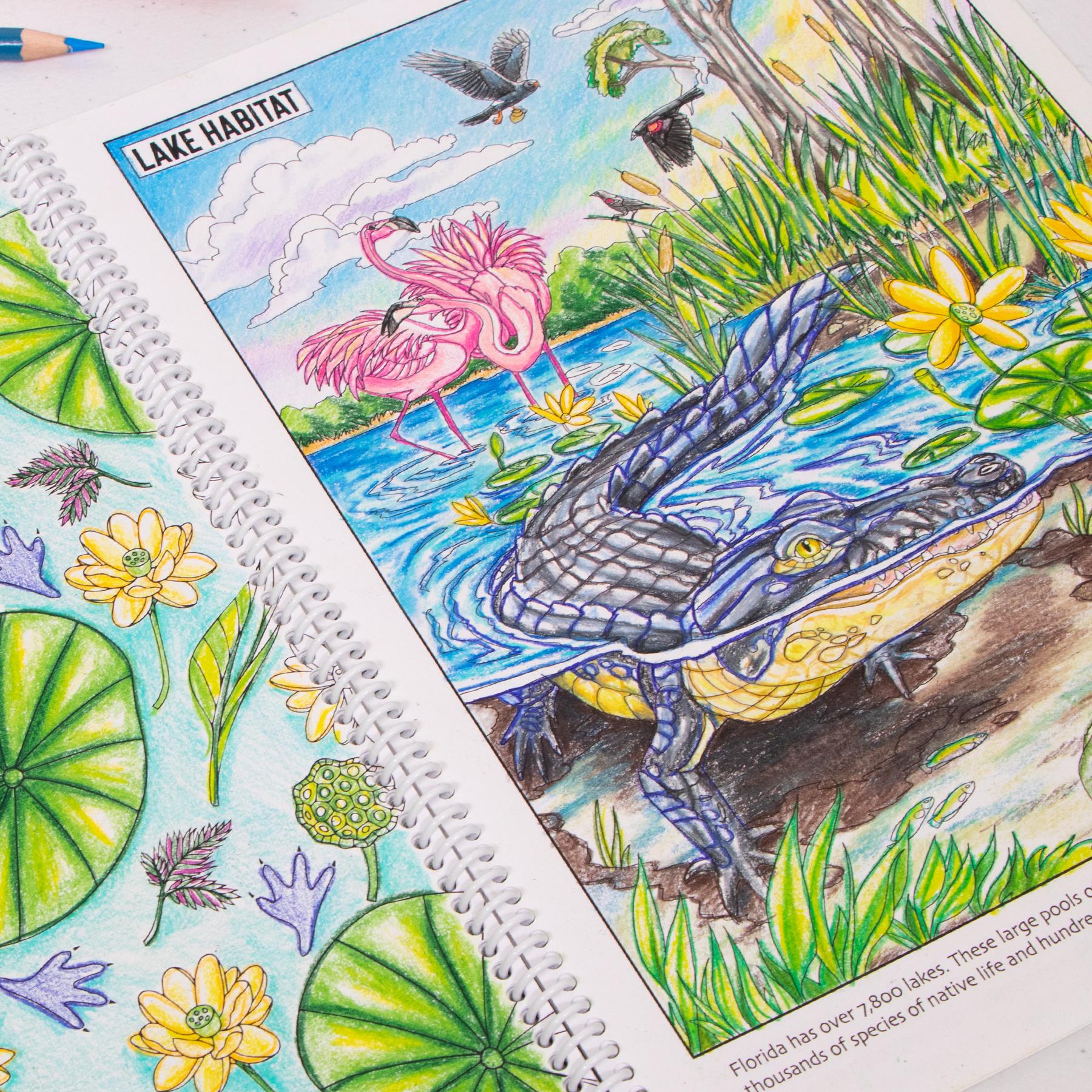 Lake habitat coloring page Wild Florida