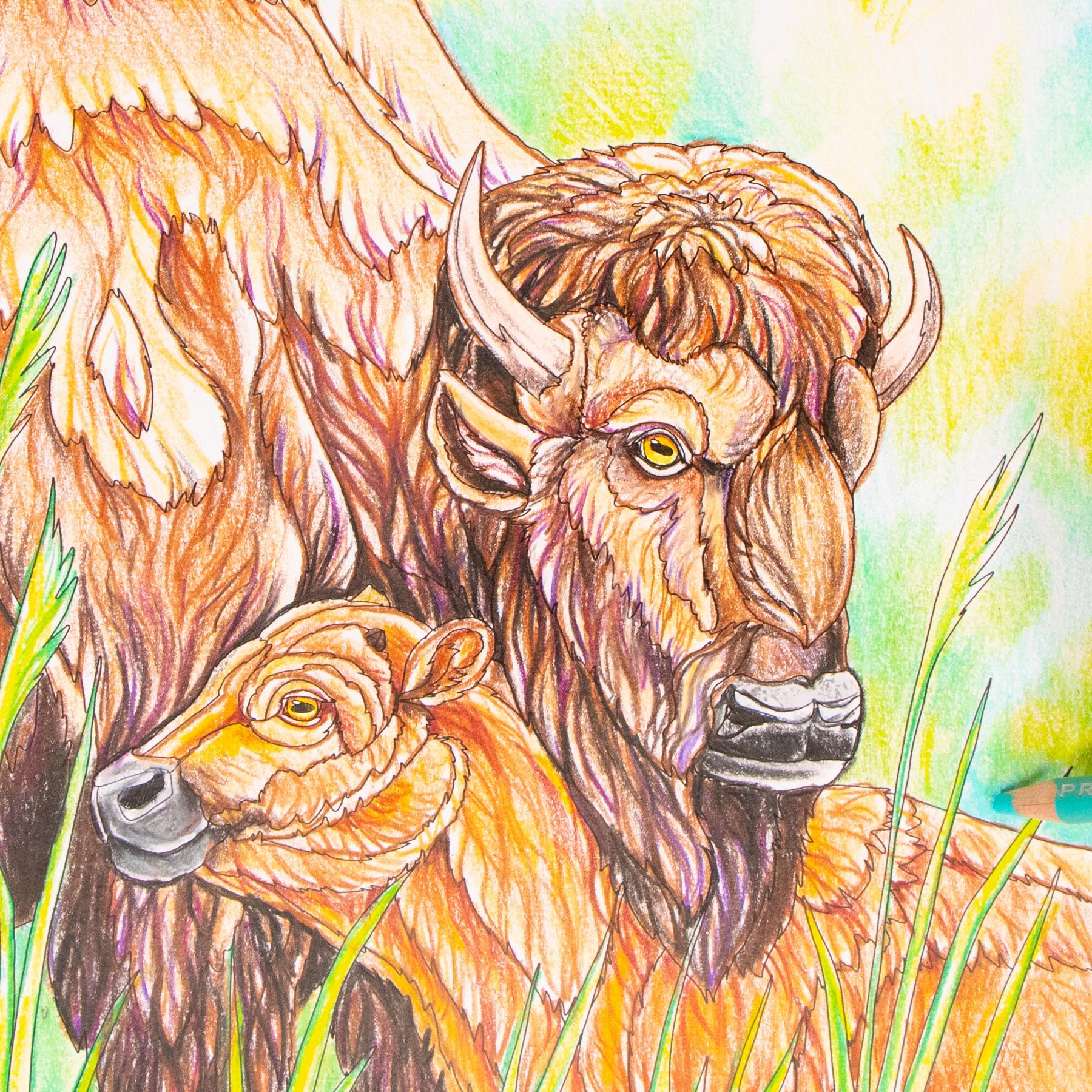 Buffalo coloring page Wild Florida