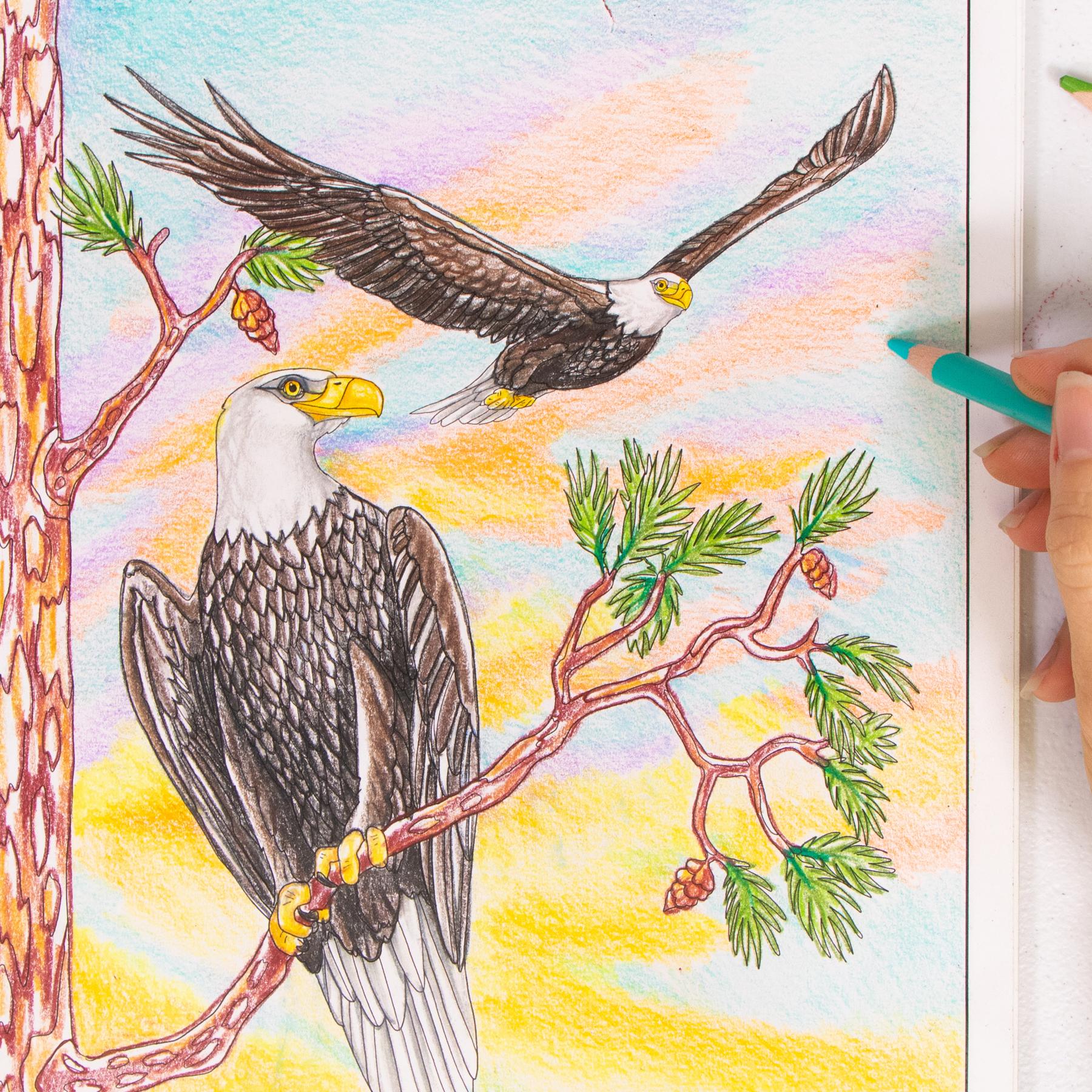 Eagle coloring page Wild Florida