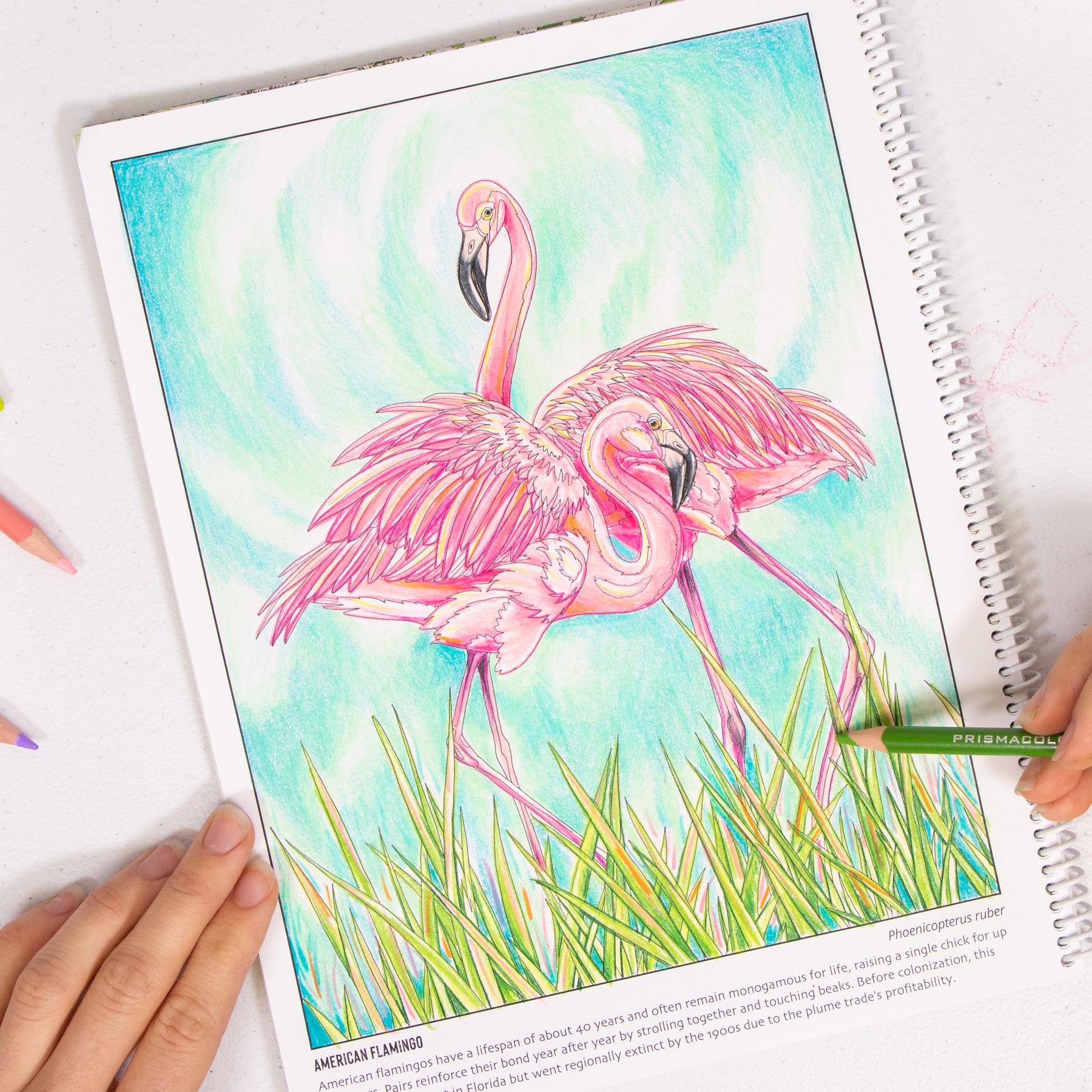 Flamingo coloring page Wild Florida