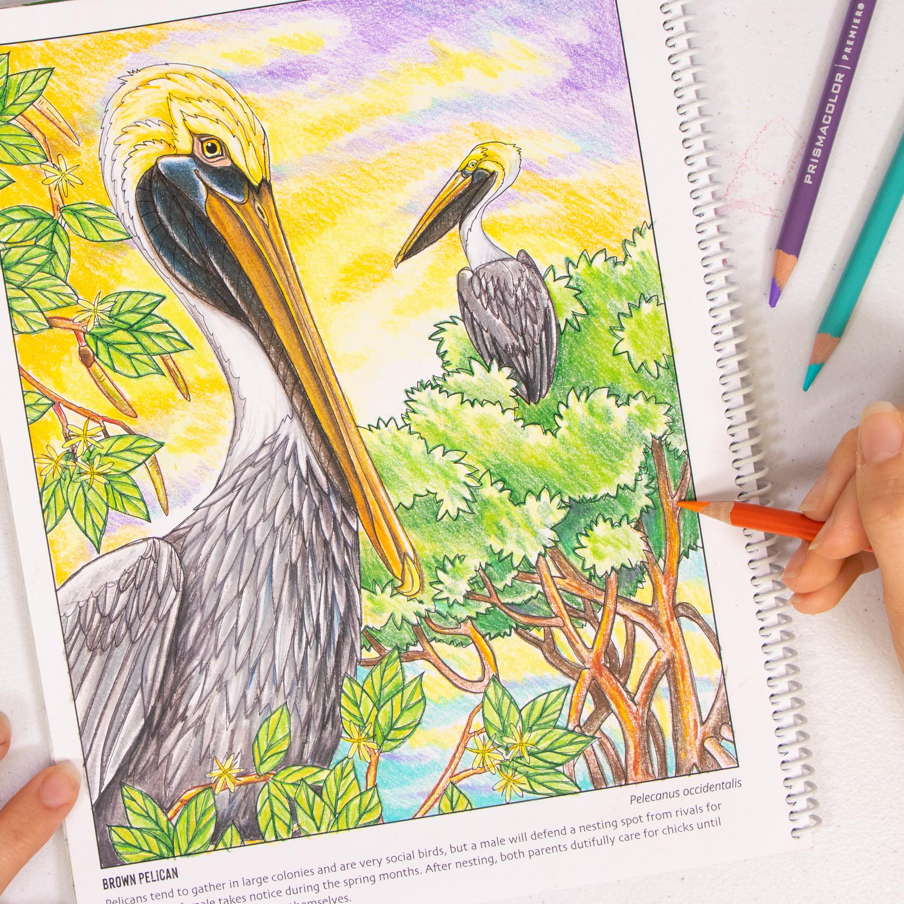 Pelican coloring page Wild Florida