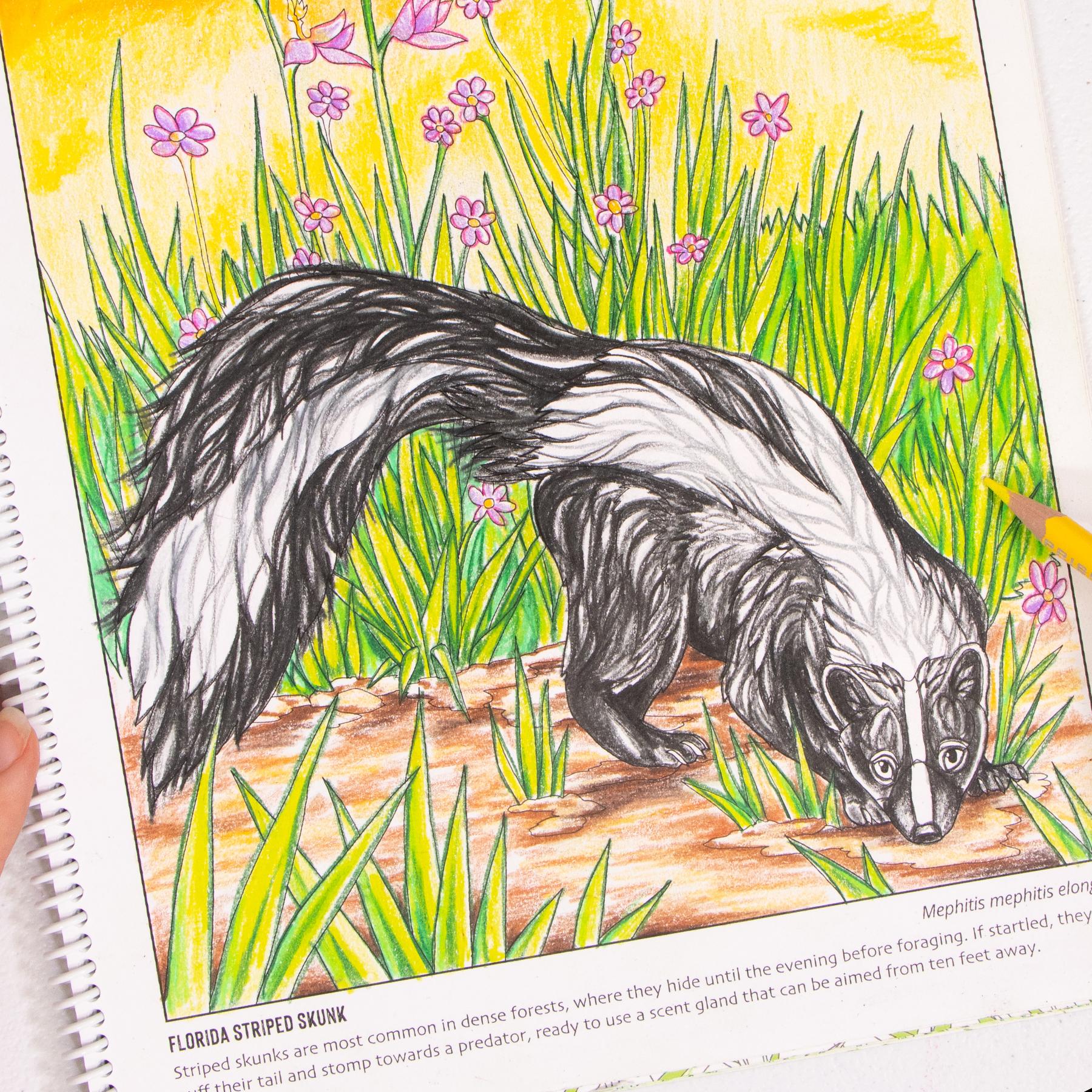 Skunk coloring page Wild Florida