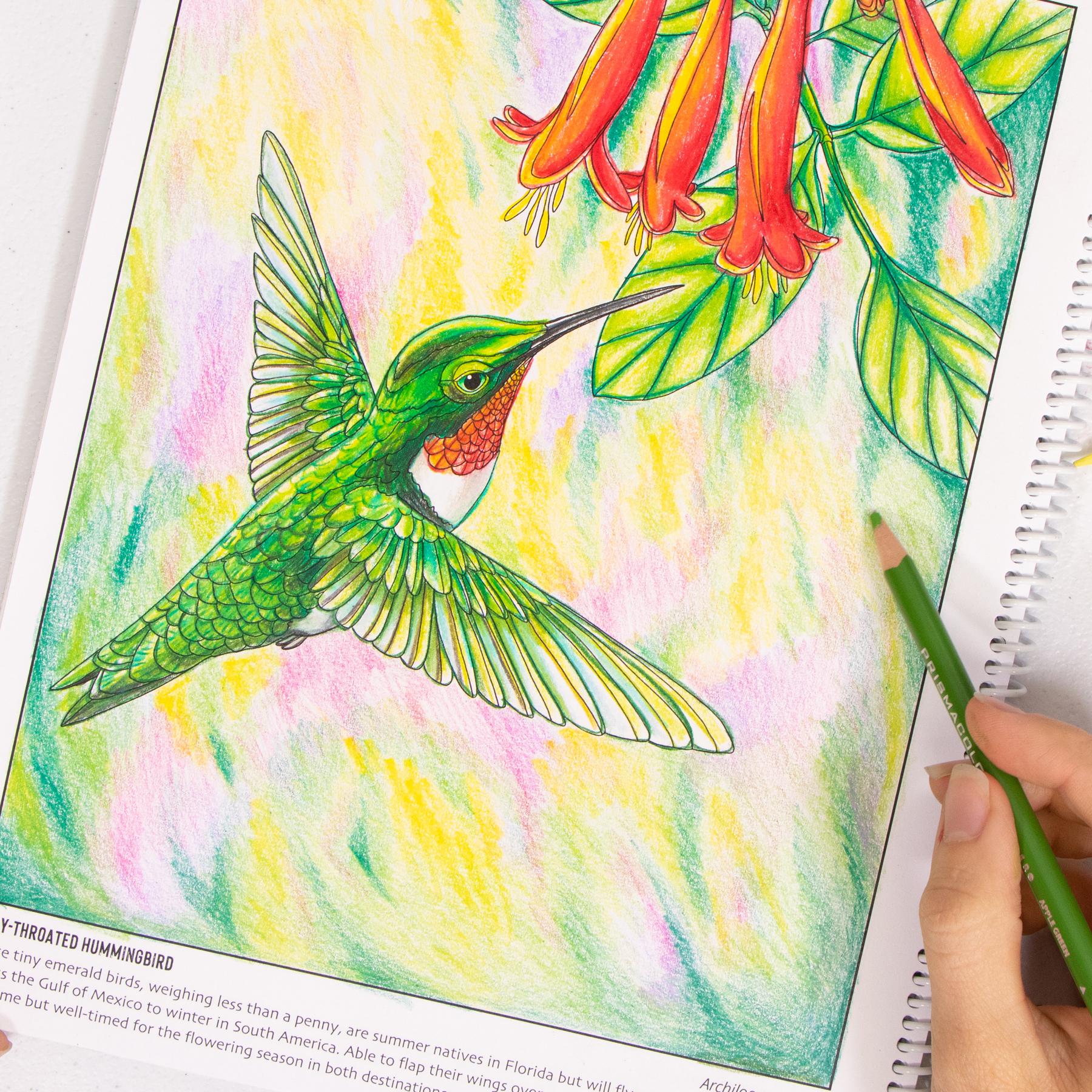 Ruby Hummingbird coloring page Wild Florida