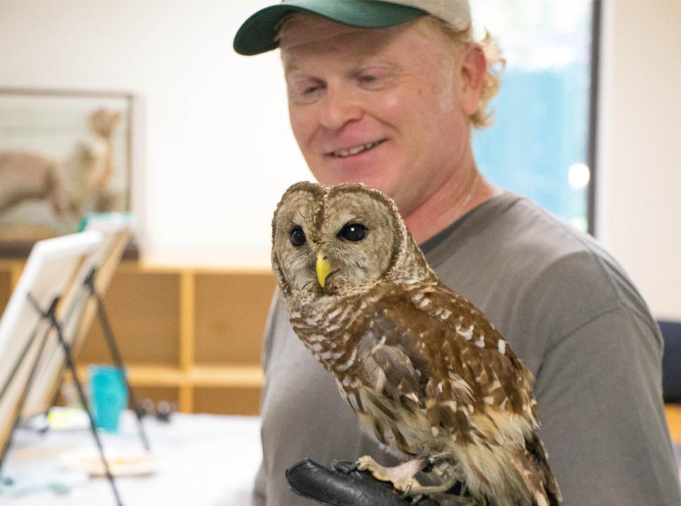 Barred owl at Boyd Hill