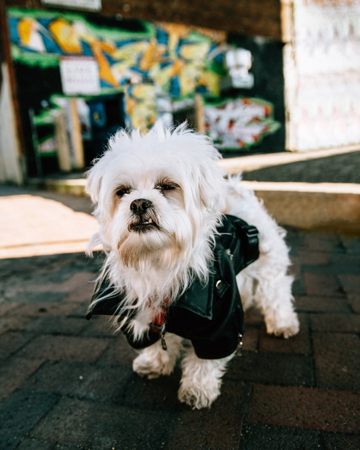 Dog in Leather Jacket
