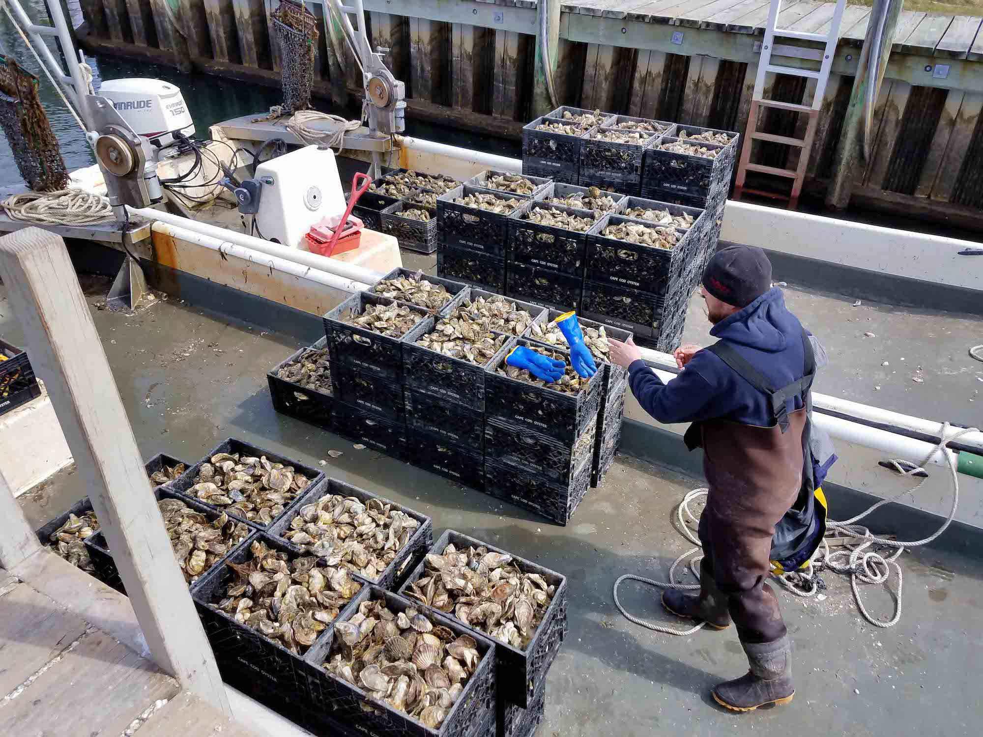 Three Bays Oysters