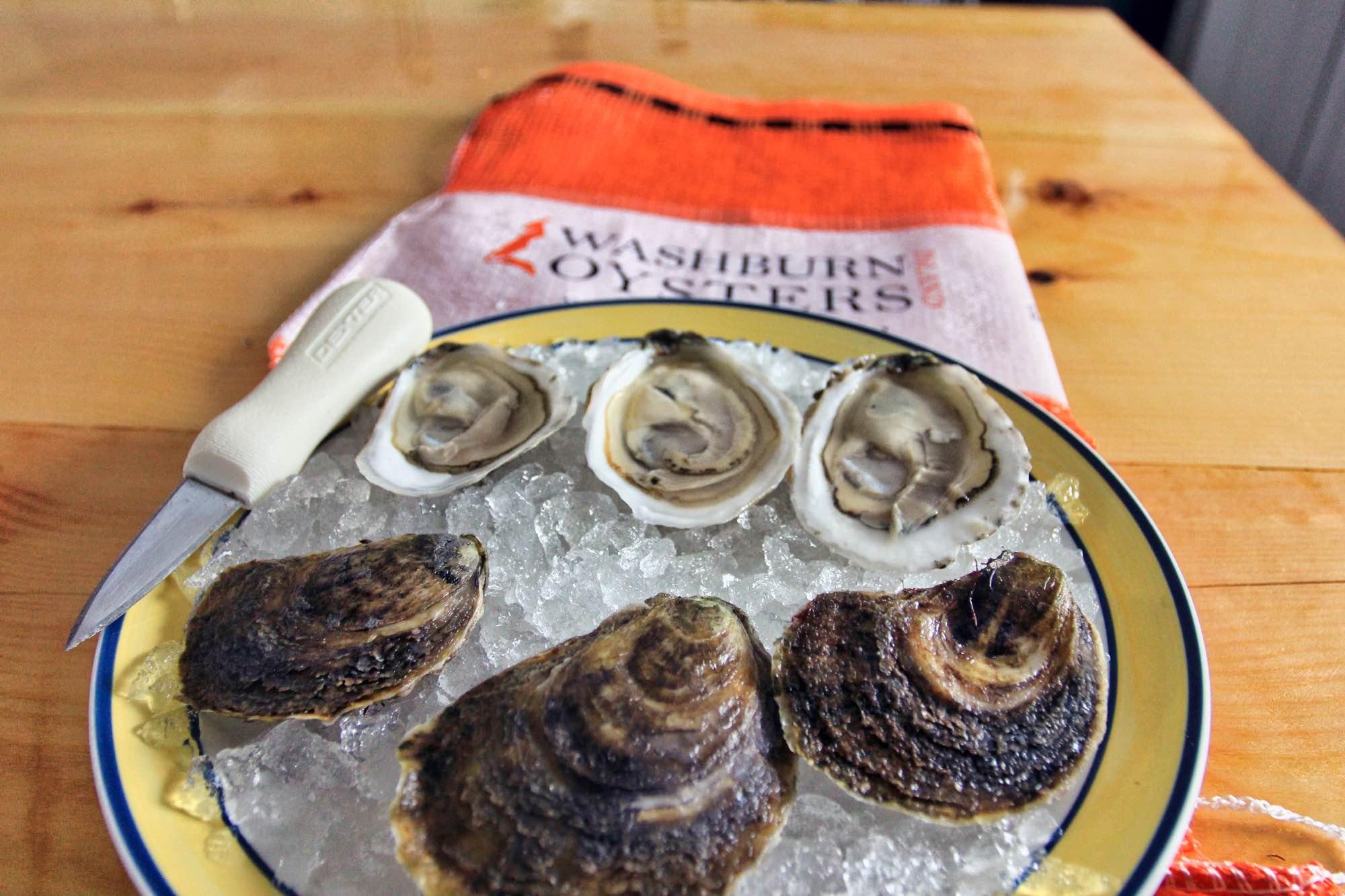 Washburn Island Oysters
