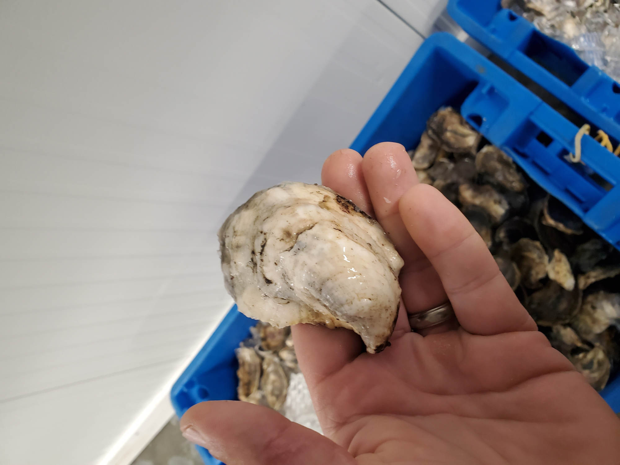 Pleasure Point Oysters