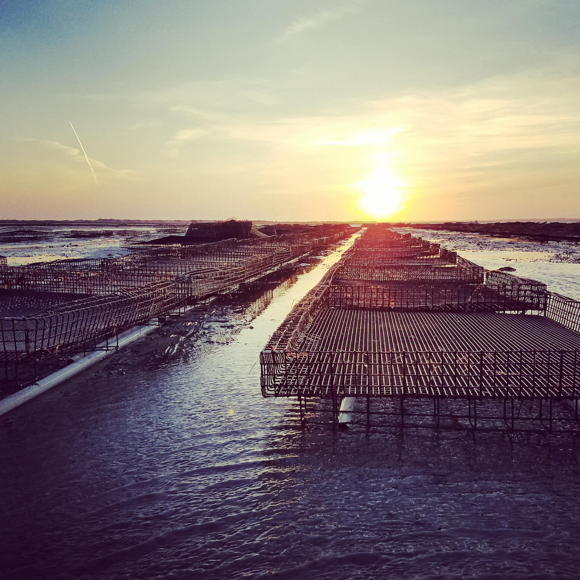 Cape Cod Oyster Company (Sunset)