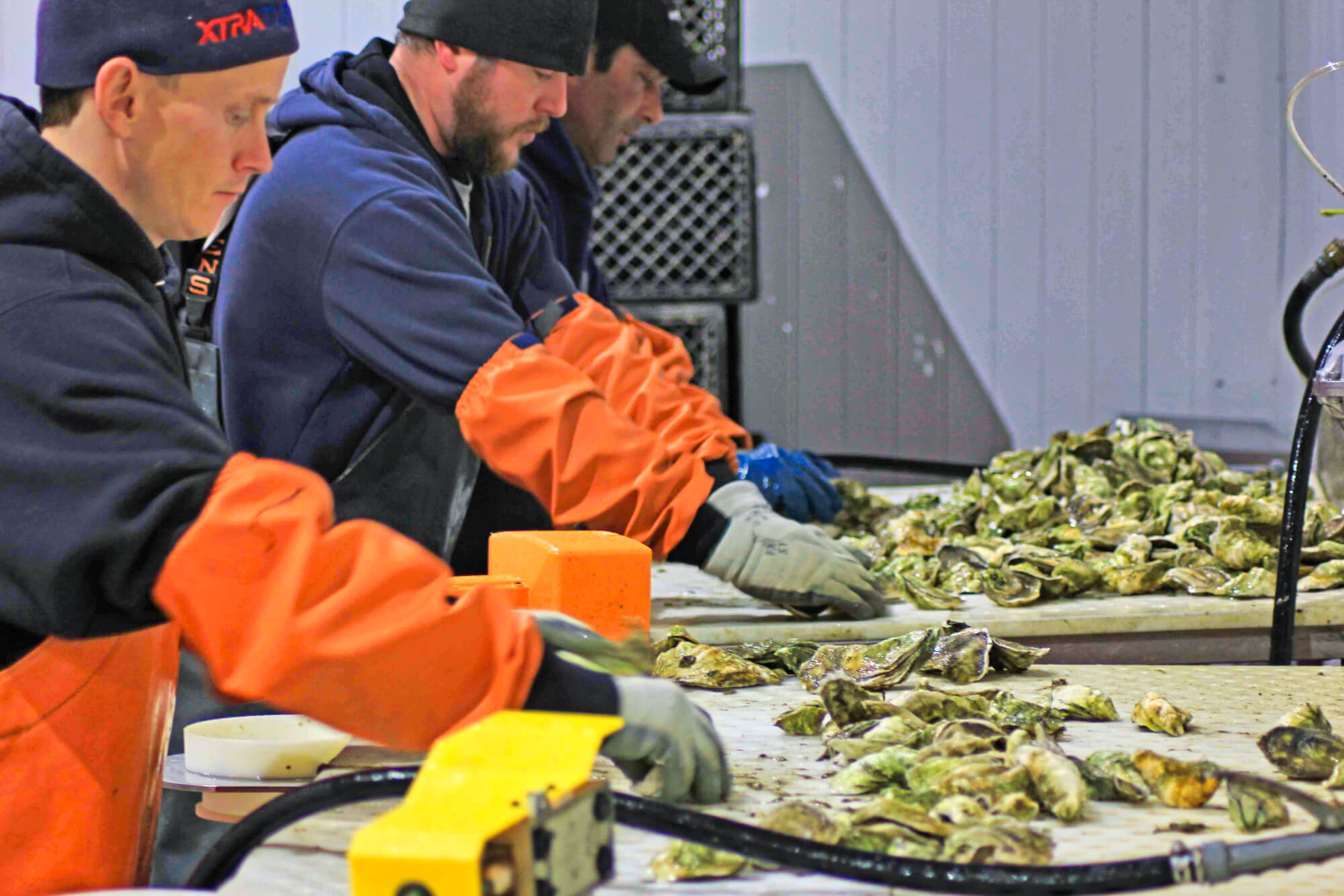 Cape Cod Oyster Company (Meet the Team)