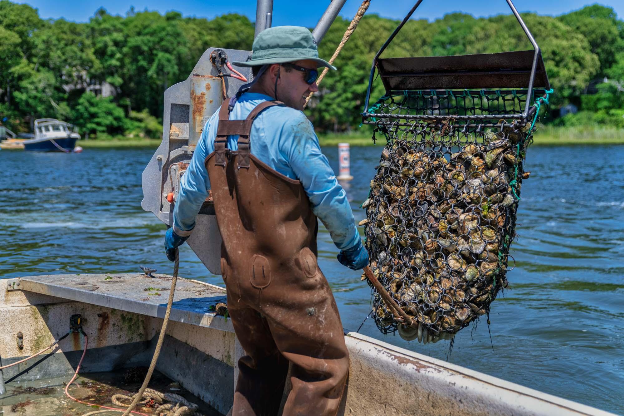 Cape Cod Oyster Company Dragging