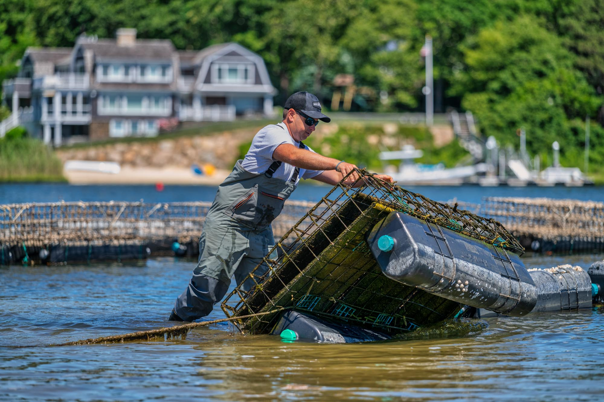 Cape Cod Oyster Company - Flipping Cages