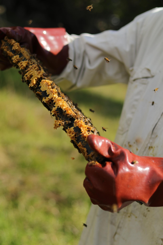 apiculteur local