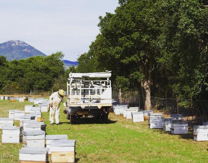 apiculteur corse