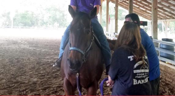 USF: HORSE SIMULATOR