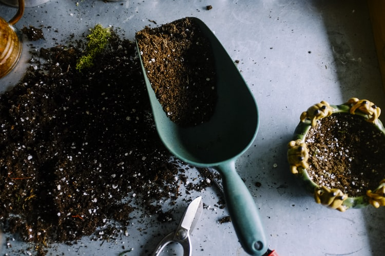 How to Compost at Home: Easy Step by Step Guide