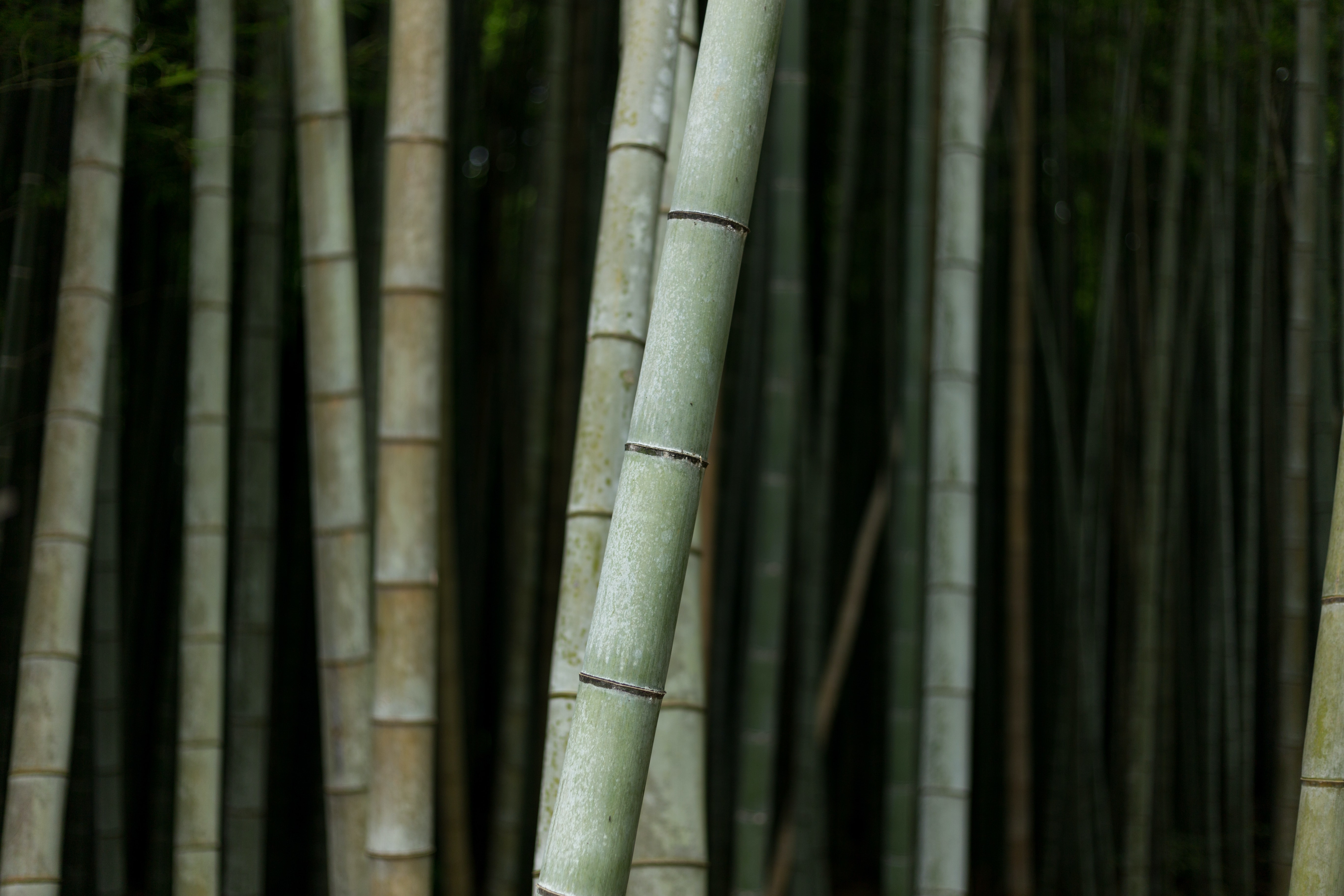 Everything you need to know about bamboo products