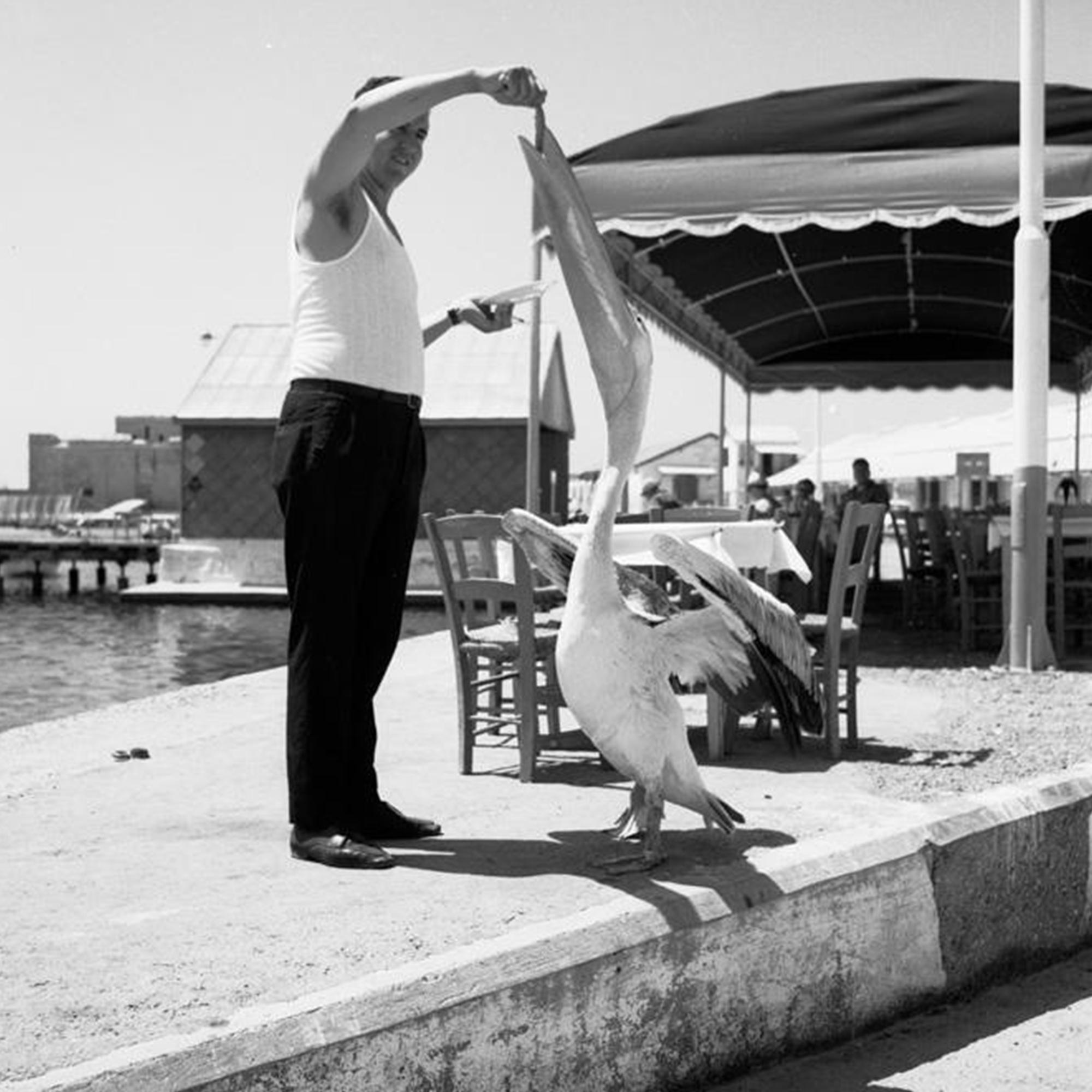 The Paphos Pelican Restaurant story