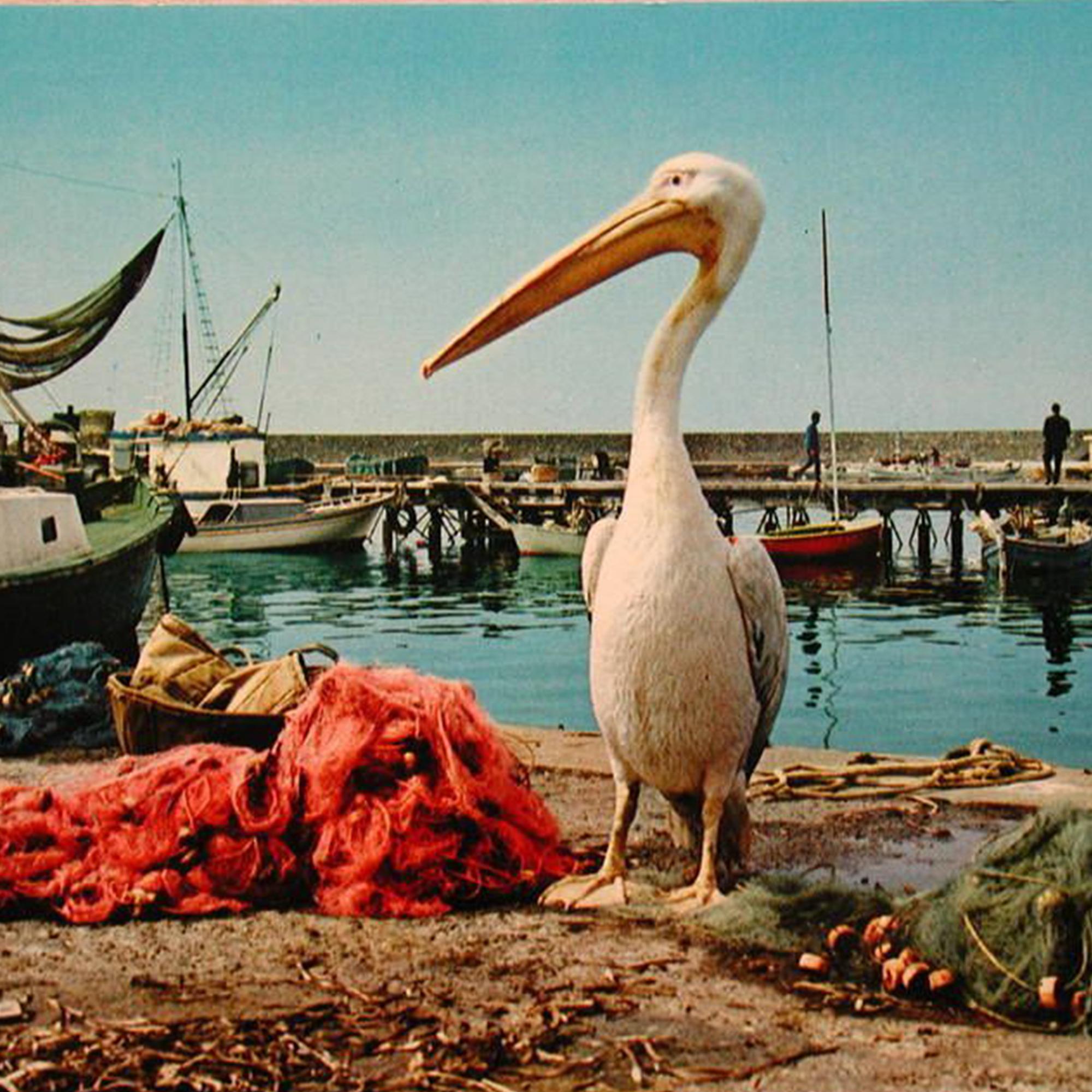 Kokos in his natural habitat - The Pelican Restaurant Paphos
