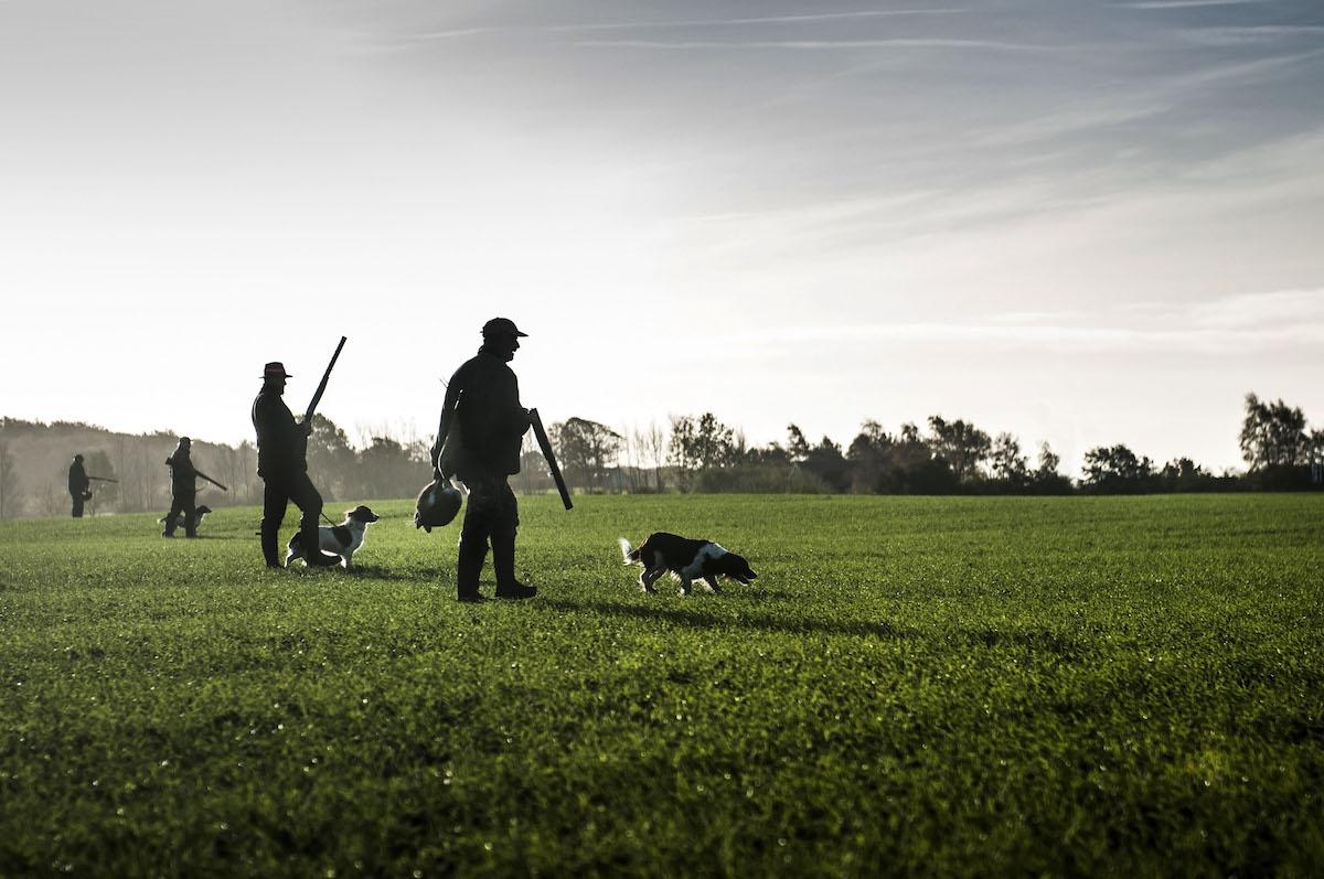 Bird Hunting Virginia