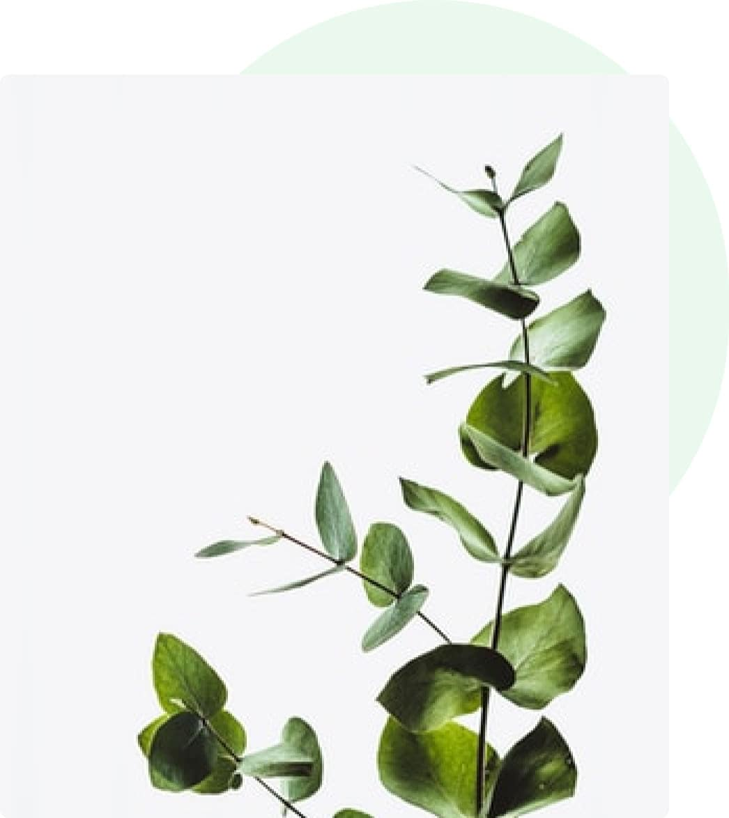 Bright green house plant against white background