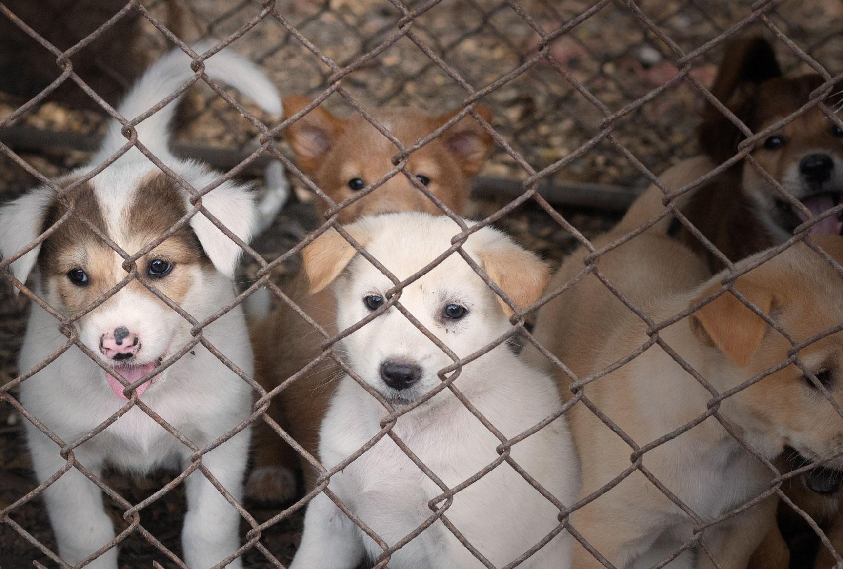 Gulliga men inlåsta hundar