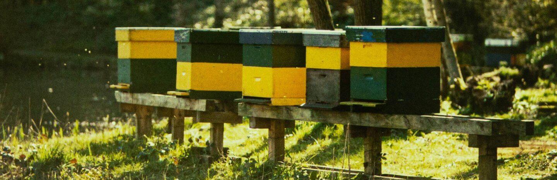 Bienenstöcke im Wald