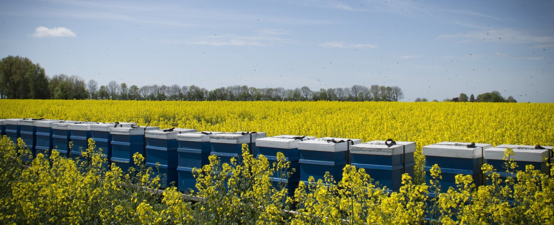 Blaue Bienenstöcke in gelben Feld