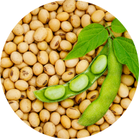 a closeup of a pile of shelled soybeans with a whole soybean with leaves on top