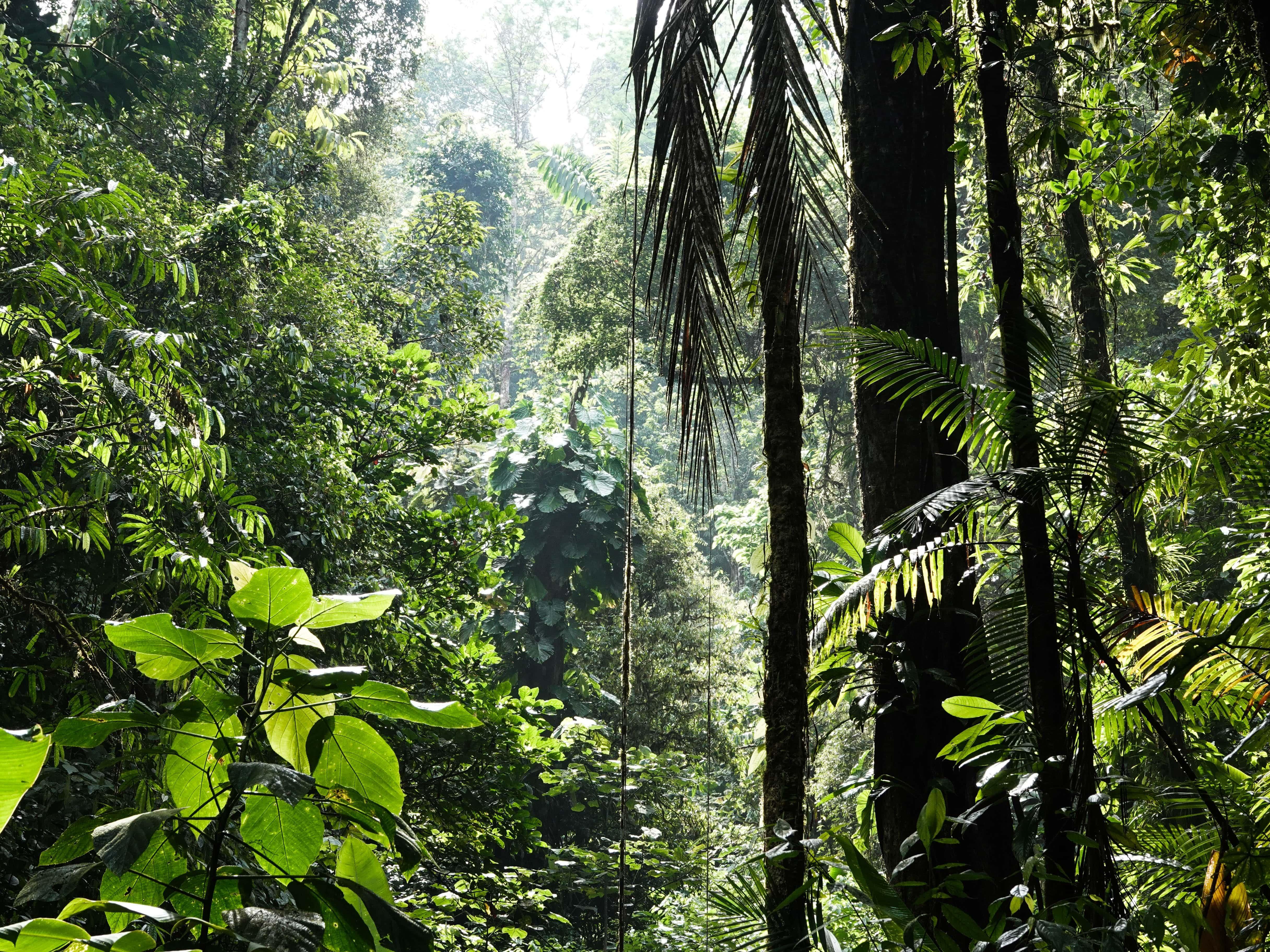 In the Spotlight, June 2021 - Momentum gathers behind biodiversity