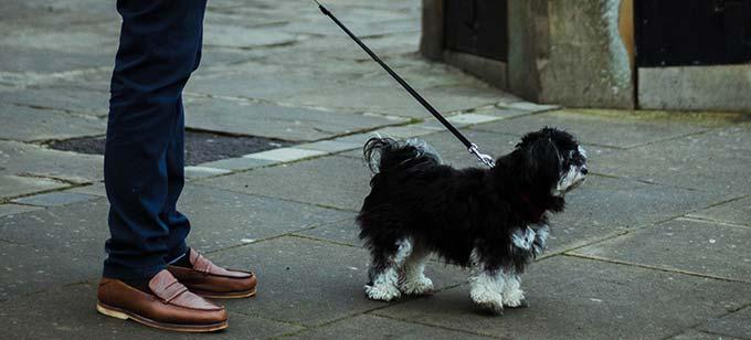 Hund an Leine neben Herrchen