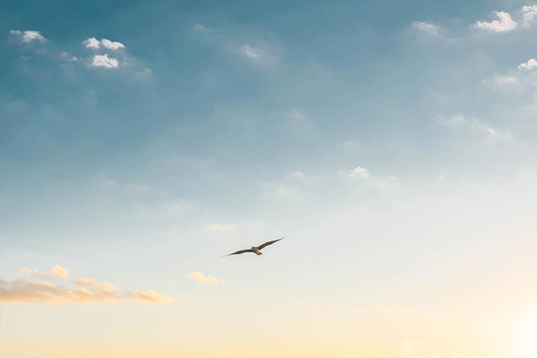Fliegender Vogel an blauem Himmel