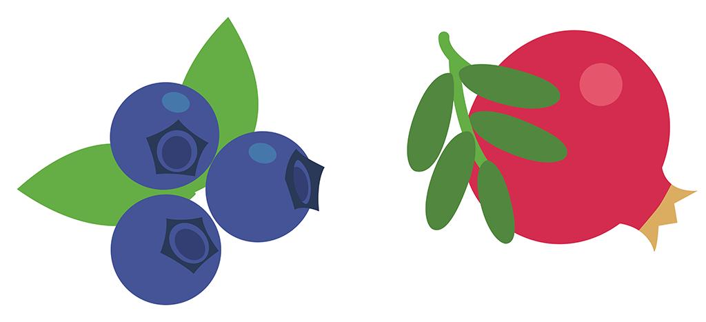blueberry pom icon