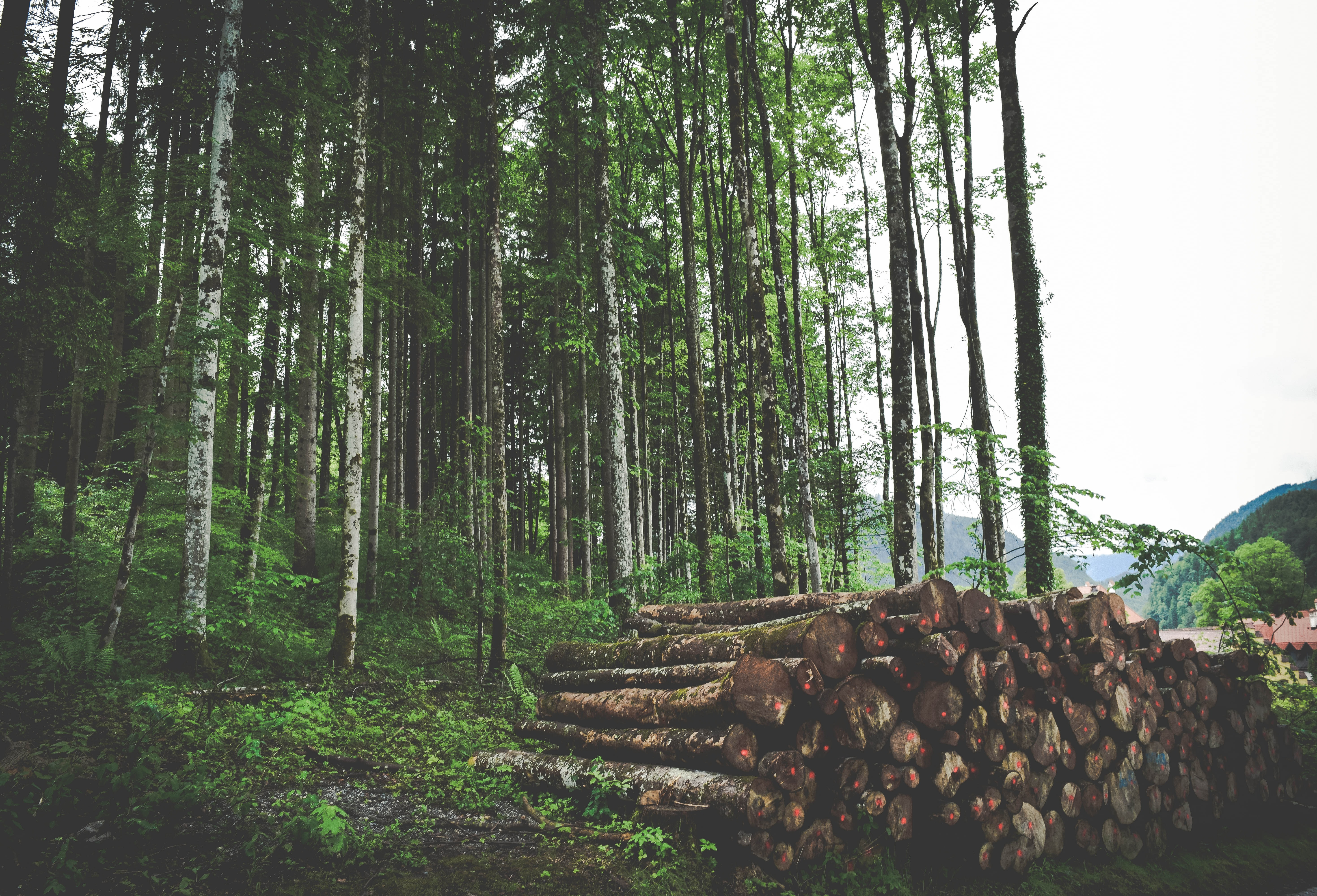 Afforestation and Reforestation: Understanding the Differences