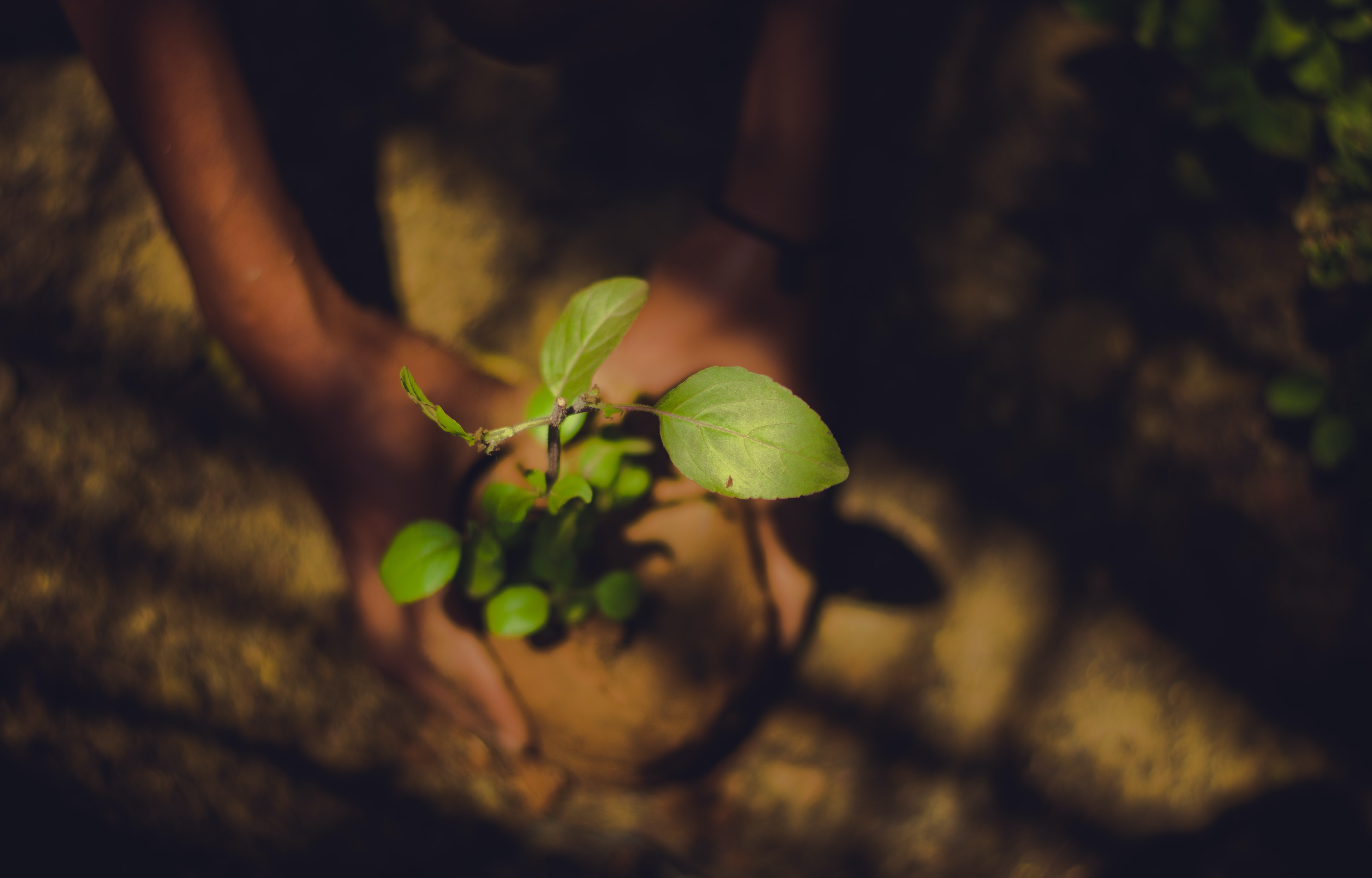 Does Planting Trees Really Offset Carbon?