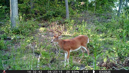 A very large Ohio trophy buck caught on an Exodus trail camera
