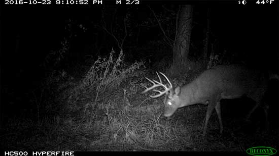 A large buck walking in the woods during the middle of the night