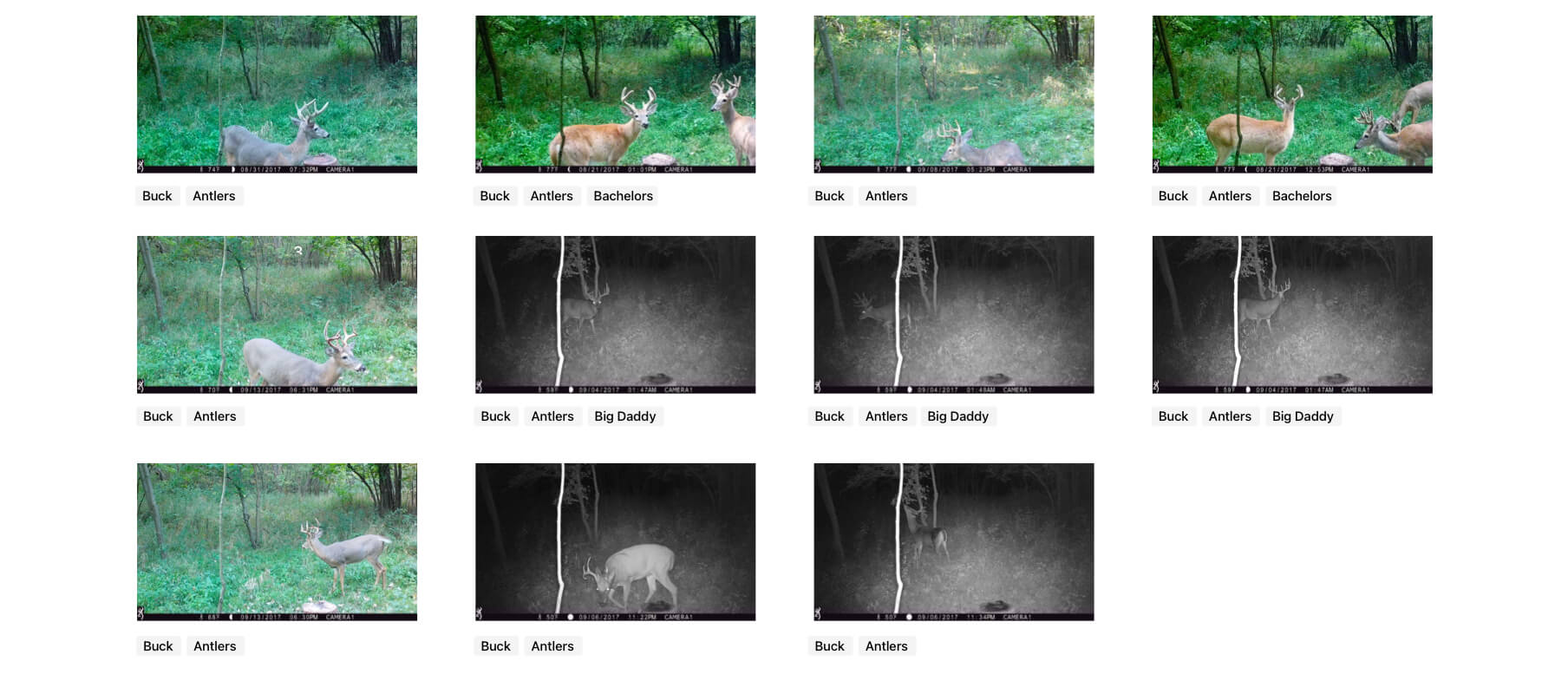 Photos with tags in DeerLab's trail camera software