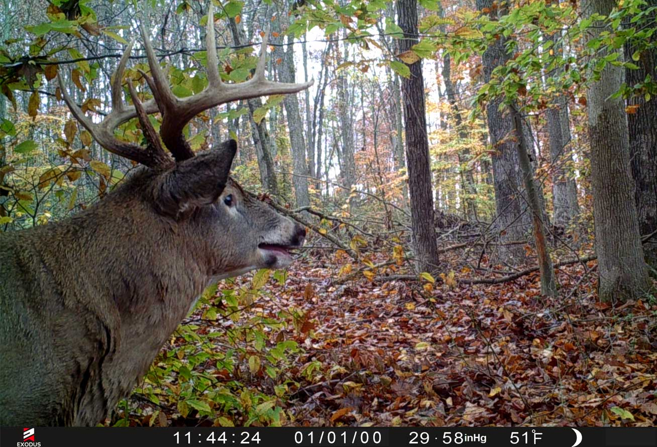 Correct timestamps on trail camera photos