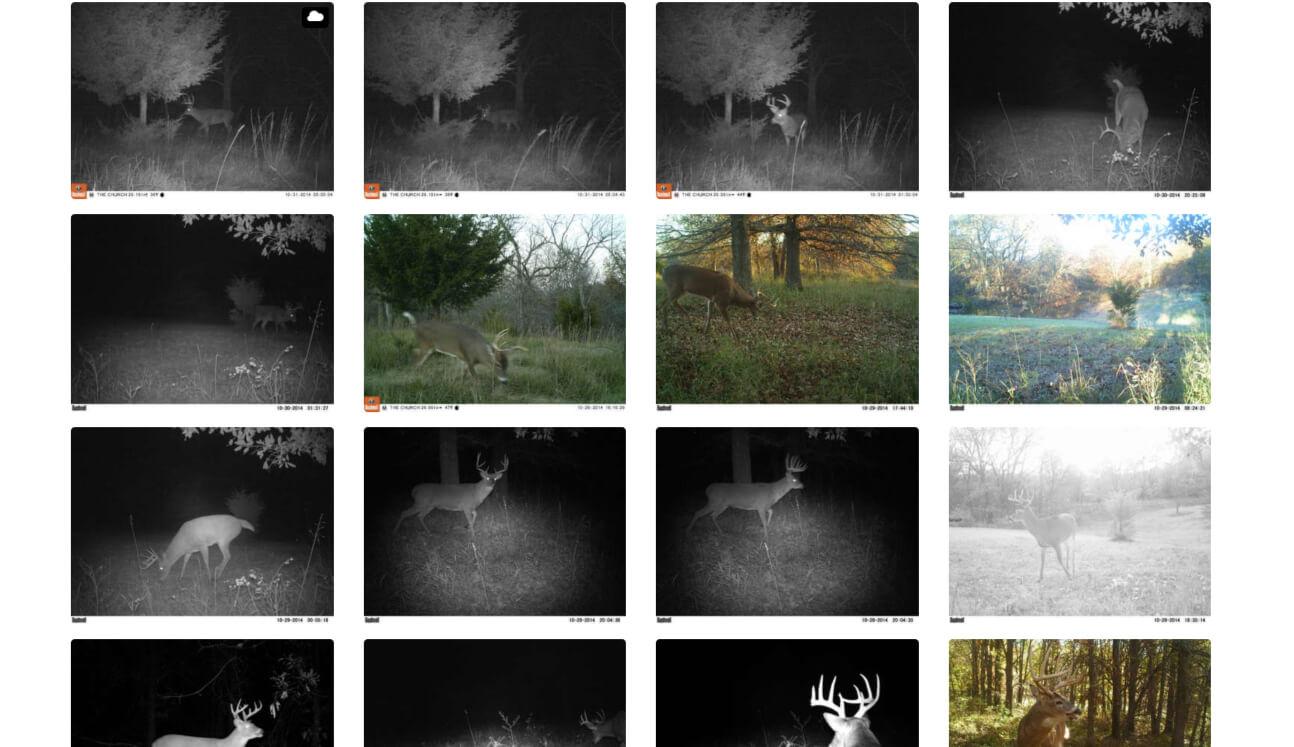 Digital album showing trail camera photos of hit list bucks.